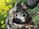 KOMPASIK-kochany, grzeczny, spokojny nieduży psiak-b.prosimy - 3