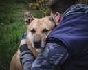 Czy taki psiak jak ja też ma szansę na dom?