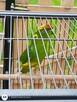 Papugi Modrolotki parka wraz z dużą klatką i wszystkimi akce