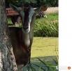 Mleko kozie Ozorków