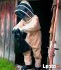 TANIO! usuwanie osy, szerszenie, pszczoły WARSZAWA i okolice