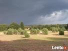 Agroturystyka Lubuska - 8