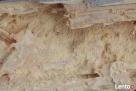 Spuszczel pospolity Zwalczanie szkodników w drewnie Ostrołęka