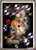 York, yorkshire terrier!!ELITARNE MICROCUDEŃKA-XXXS!Kraków-ma - 6