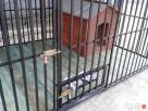 Kojce dla psów Kojec dla psa Boks Boksy Klatki Klatka 24h!!! - 3