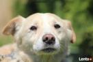 Valentino- Joanna Krupa poleca do adopcji! - 7