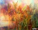 Obraz - Jesienne trawy, impresja. Zielona Góra