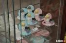 Słodkie dekoracje cukiernicze do ciast i tortów wysyłka kuri - 6