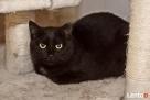 Młoda Padwa - spokojna nieśmiała czarna piękność :)