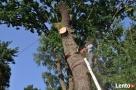 Wycinka drzew,krzewów, usówanie karp i przycinanie gałęzi - 1