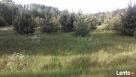 Sulejówek - Węgrów. Budowlana, warunki zabudowy, przy lesie - 8