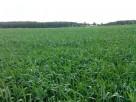 Ziemia rolna klasy IVa IVb w dobrej kulturze 36 hektarów
