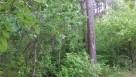 Sprzedam działkę leśną - 4