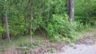 Sprzedam działkę leśną - 3