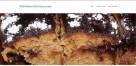 Indywidualne unikatowe projekty firmowych stron www