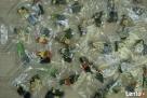 LEGO MINIFIGURES - 8805 - 5 SERIA - Wyprzedaż kolekcji - 2