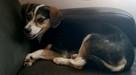 Pieski do adopcji - 2