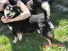 KAMYCZEK-Przemiły pies z maską na pyszczku do adopcji.Kochan - 7