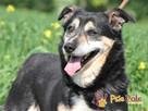 KAMYCZEK-Przemiły pies z maską na pyszczku do adopcji.Kochan - 5