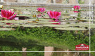 Uzdrawiające kąpiele, spokój i bajkowy zamek - BOJNICE - 7
