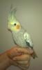 Papugi - 4