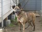 Pies do adopcji - Tigra szuka dobrego domu - 2