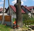 Wycinka drzew - 1