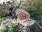 Wycinka drzew - 3