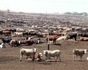 wspomaganie chowu i hodowli zwierząt dla zdrowia ludzi - 5
