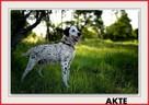 20kg,średnia, łagodna,sterylizowana suczka AKTE.Adopcja - 1