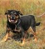 Pumba uśmiechnięta i kochana psina szuka domu Dom dla - 2