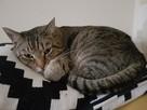 Zaginął kotek - 1