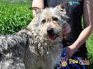 ANIKO-super kochany, bardzo grzeczny kudłaty psiak-szukamyDOM