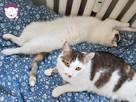 Dom tymczasowy dla kotów - poszukiwany - 11