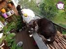 Dom tymczasowy dla kotów - poszukiwany - 9