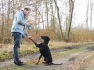Toro ok.2 letni pies w typ dobermana do adopcji Joanna Koc - 2