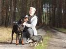 Toro ok.2 letni pies w typ dobermana do adopcji Joanna Koc - 6