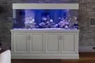 Akwarium 200x50x70 z szafką i wyposażeniem
