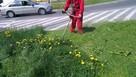 Koszenie trawy, karczowanie, sprzątanie działek, Wyburzenia, - 5