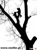 Wycinka drzew metodami alpinistycznymi, usługi rębakiem