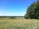 Piękne działki w Zielątkowie