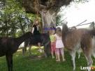 Wakacje z dziećmi agroturystyka Ciche Jeziora w Okół Lasy - 2