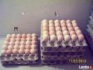 Sprzedam jaja!!! Żuromin