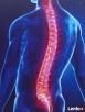 Rehabilitacja - Fizjoterapia w Domu Pacjenta
