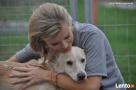 Valentino- Joanna Krupa poleca do adopcji! - 5