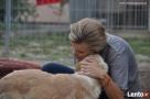Valentino- Joanna Krupa poleca do adopcji! - 6