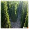 Koszenie trawy wykaszanie wisła brenna ustroń górki skoczów - 4