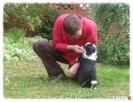SHAGGY DOG - SPA, hotel, minisklep dla psa i kota - 3