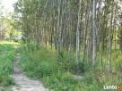 Sprzedam działkę w Kierszku w otulinie Lasu Kabackiego - 4