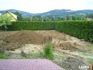 Usługi ogrodnicze-wycinka drzew i,formowanie krzewów,trawnik - 7